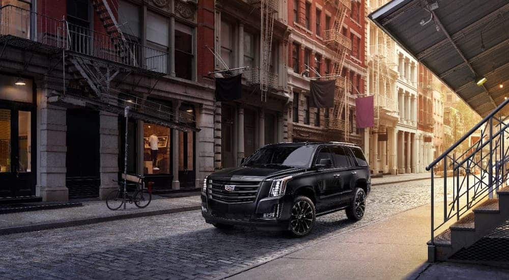 A black 2019 Cadillac Escalade is parked on a city street with cobblestones.